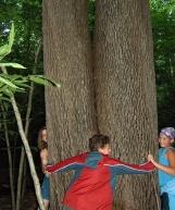 Allegeny trees
