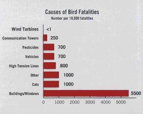 Bird Graph 2